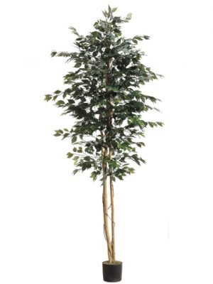 8' Ficus Tree w/1512 Leavesin PotGreen