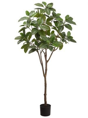 6' Michelia Alba Tree in Plastic Nursery Pot Green