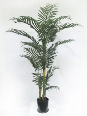 6' Areca Palm Tree in Pot Green