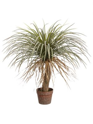 "31"" Desert Palm Tree in Plastic Pot Green Beige"