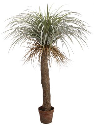 "54"" Desert Palm Tree in Plastic Nursery Pot Green Gray"