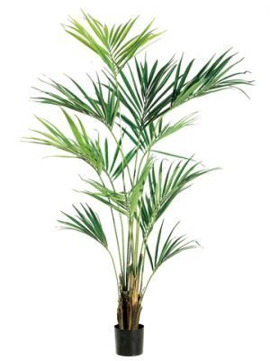 "93"" Kentia Palm Tree in Pot Light Green"