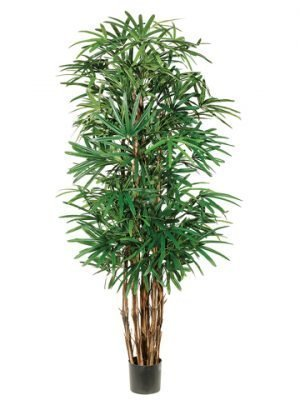 7.5' Lady Palm Tree x7 with 1003 Leaves in Pot Two Tone Green
