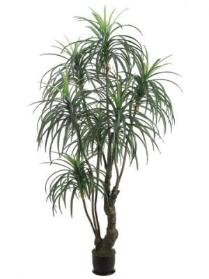 7' Yucca Tree x3 with 392 Leaves in Pot Two Tone Green