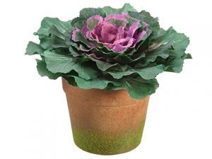 "6"" Cabbage in Terra Cotta Pot Green Purple"