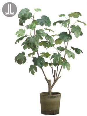 "48"" Fig Plant in Clay Pot Green"