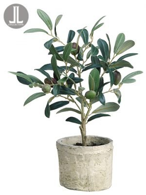 "12"" Olive Tree in Clay Pot Green Burgundy"