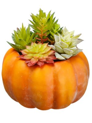 Succulent inOrange Pumpkin