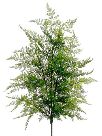"36"" Lace Fern Bush Green"