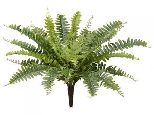 "18"" Boston Fern Bush x32 Green"