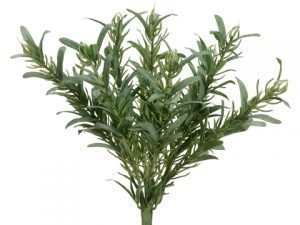 "9"" Rosemary Bush x9 Green"