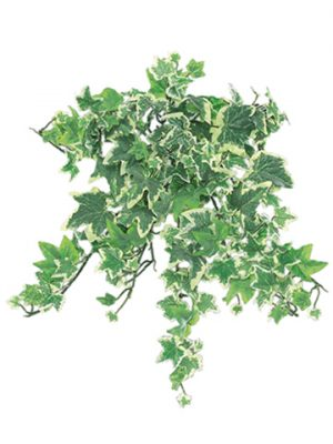 """13"""" Mini Ivy Hanging Bushw/180 LeavesFrosted Variegated"""