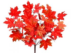 "18""maple Leaf Bush x10 Brick Watermelon"