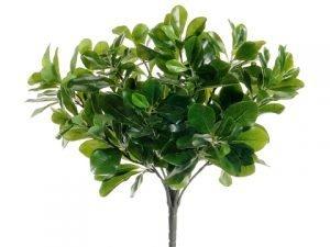 """15"""" Wax Privet Bush x12 Green"""