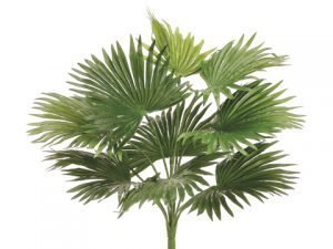 "18"" Fan Palm Bush Green"