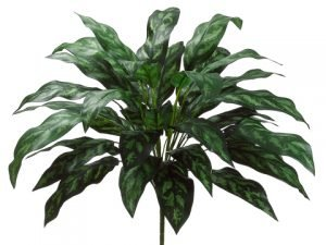 "28"" Silver Queen Plant with 36 Leaves Dark Green"