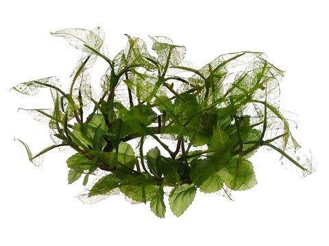 """3"""" Pearlina Oak Leaf CandleRingGreen"""