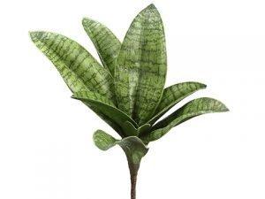 "7"" Sanseveria Pick Green"