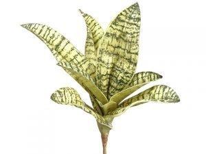 "7"" Sanseveria Pick Yellow Green"