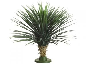 "30.5"" Californian Whipple Yucca on Base (knock-down packing) Green"