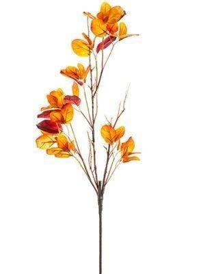 "28"" Cotinus Spray Orange Flame"