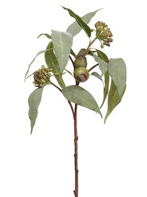 "25"" Eucalyptus Seed Spray  Green"