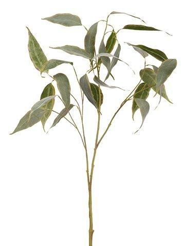 """36"""" Eucalyptus SprayGreen Brown"""