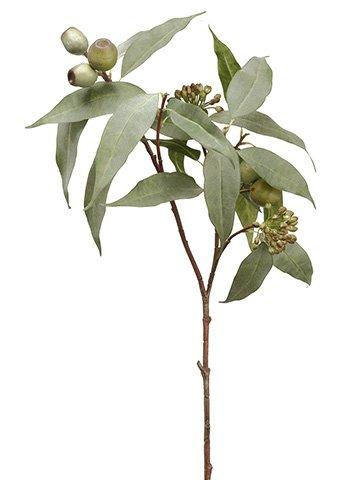 "32.5"" Eucalyptus Seed SprayGreen"