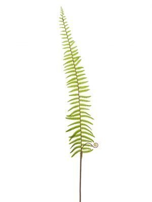 "59"" Dicranopteris Fern Spray  Green"