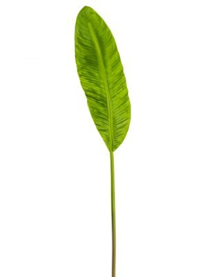 "8""Wx45""L Soft Banana LeafSprayGreen"