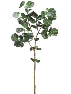 """67"""" Polyscias Leaf SprayGreen"""