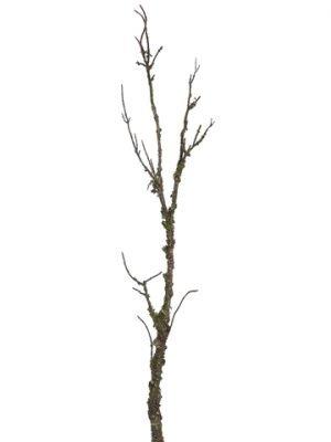 """45"""" Mossy BranchGreen"""