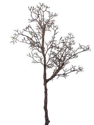 "32.5"" Twig BranchBrown"