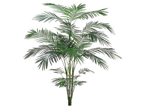 7' Tropical Areca Palm x5with 861 Leaves