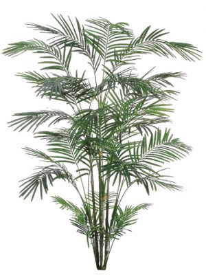 8' Tropical Areca Palm x6 with 1017 Leaves