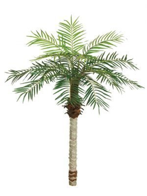 5.5' Date Palm Tree x15 w/525 Leaves
