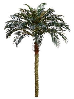 7' Phoenix Palm Tree