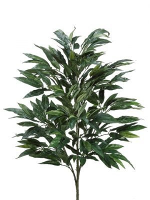 3' Mango Tree x4 with 283 Leaves Green