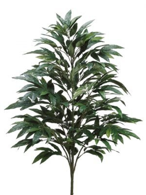 4' Mango Tree x7 w/427 LeavesGreen