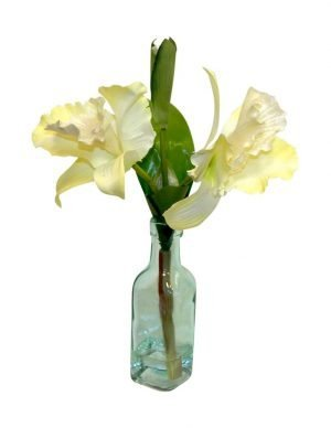 Cattleya orchid in glass