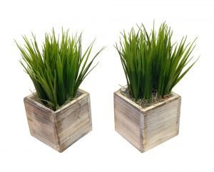 A set of grass inwooden containers