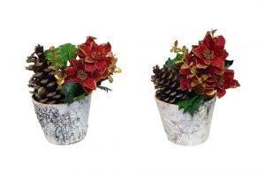 A set of poinsettias in birch pots
