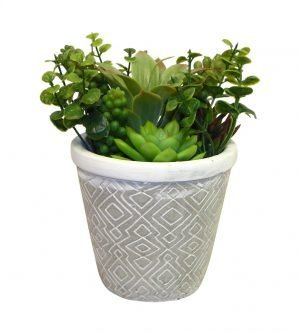 Succulent garden in a textured garden planter