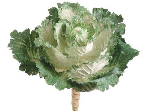 """11.5"""" Ornamental Cabbage Cream Green"""