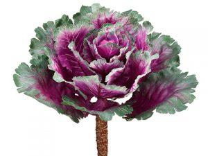 """11.5"""" Ornamental Cabbage Purple Green"""