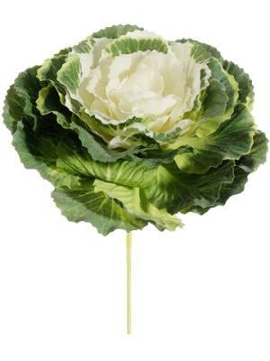 """4"""" Cabbage Pick Green Cream"""