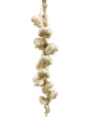 """25"""" Garlic String"""