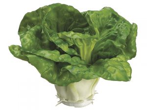 """3.5"""" Cabbage Green"""