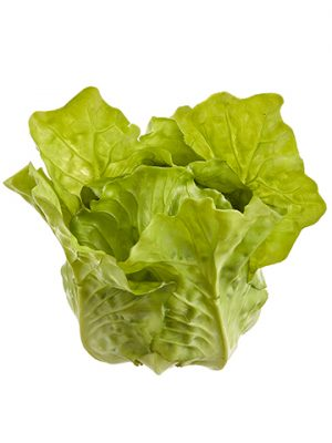 """4.7""""H x 3.5""""W x 4.3""""L Lettuce Green"""
