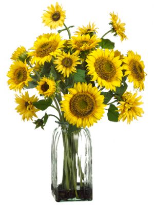 "30""H x 17""W x 17""L Sunflower in Glass Vase Yellow"